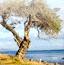寂寞之树拼图