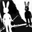 兔子的预言