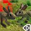 当你变成兔子