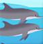 海豚一日游