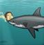 老葛大战食人鲨