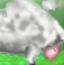 赶羊回羊圈