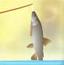 卡罗琳岛钓鱼