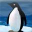 企鹅跳高中文版