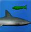 失落的鲨鱼