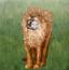 打嗝的狮子