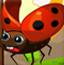 瓢虫成长之旅