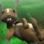 悠闲的兔子