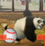 功夫熊猫棒球