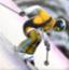 花式特技滑雪