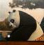 功夫熊猫乒乓球