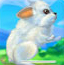 照顾宝贝兔子