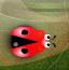 圈圈甲壳虫