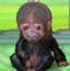 照顾可爱小猩猩