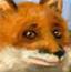 解救小狐狸