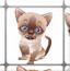 布偶猫连连看