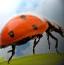 瓢虫的战争-外敌