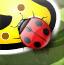 寻找彩色瓢虫
