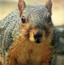 松鼠隐藏的动物