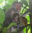 隐藏的小动物之猴宝宝