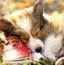 隐藏的动物之可爱小狗