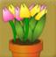 花屋里找花朵