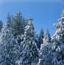冬季森林寻宝