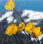 黄色花朵拼图