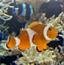 海底世界找动物