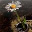 最后的花朵