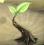 植物大战甲虫