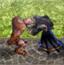 魔兽战争2.1