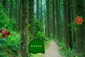 南方森林逃亡